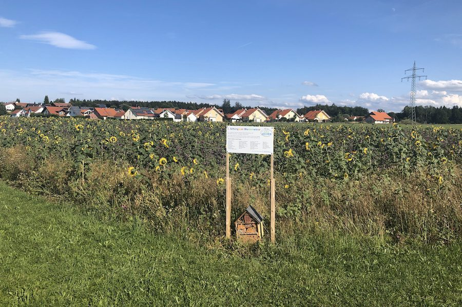Biohof Jocher Blumenwiese